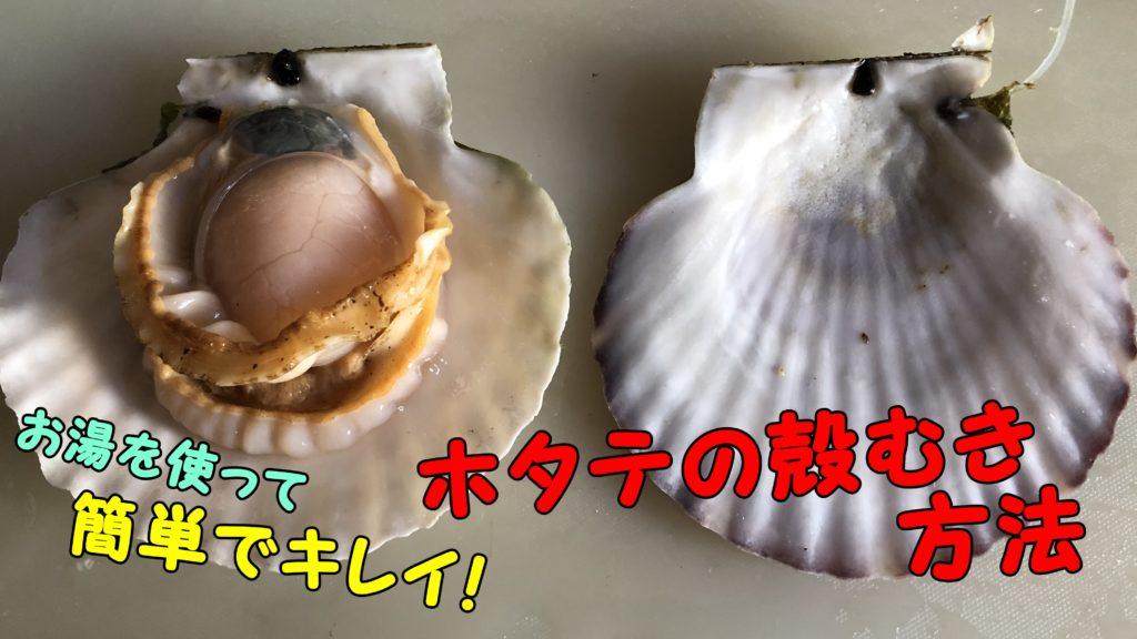 ホタテの殻むきをお湯を使って簡単できれいに行う方法【実践あり】